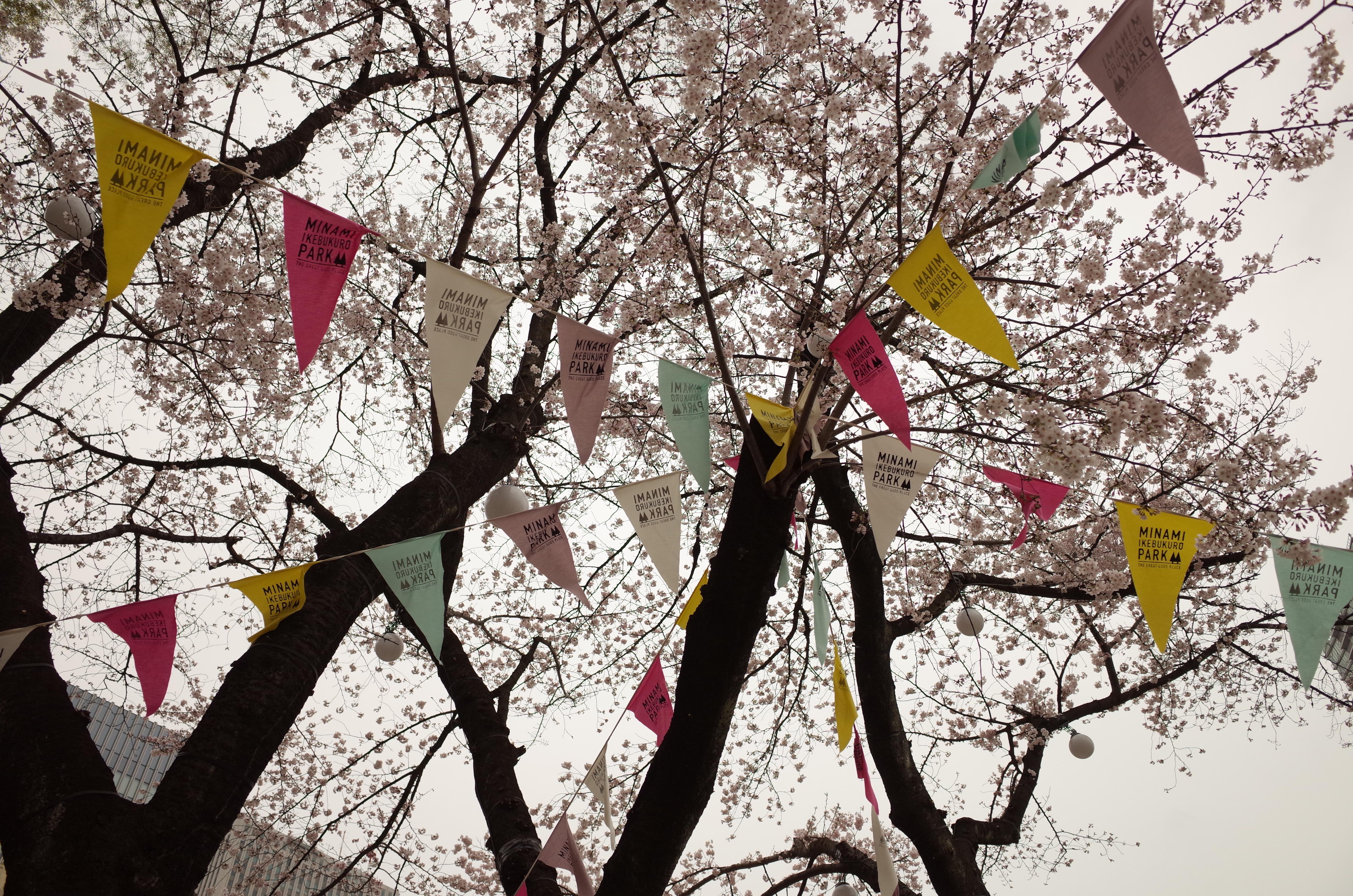 リニューアルオープンした南池袋公園でお花見してきた!