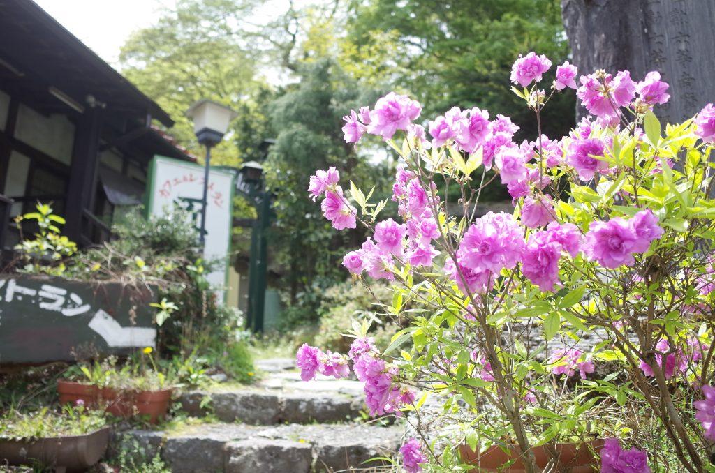 金谷ホテルの下に咲いていた花