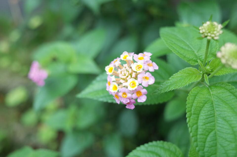 やちむん喫茶シーサー園に咲いていた花